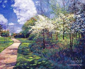 Dogwood Trees in Bloom sells