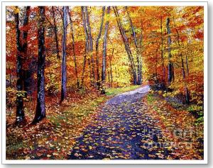 Leaf Covered Road Sells
